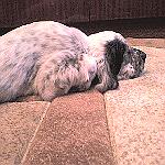 Санда спит