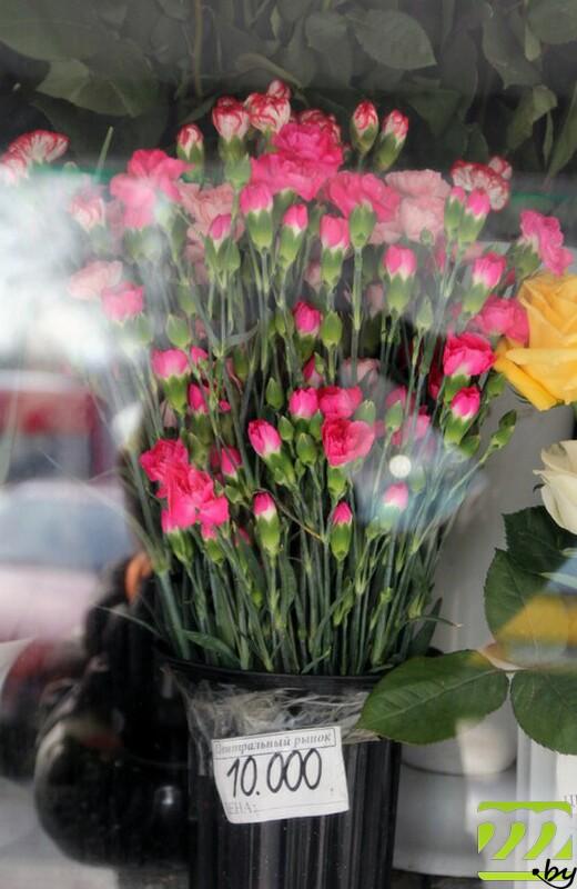 Какие цветы можно купить в цветочном магазине купить дешево цветы лизиантус