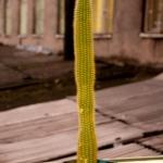 Даже кактус мечтает о хорошей экологии