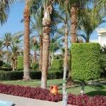 Египет, территория отеля