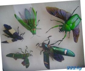 самоцветы жуки