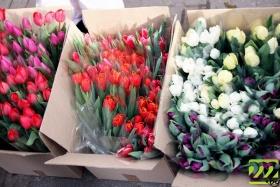 Тюльпаны на Минском рынке продают ящиками