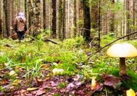 Заблудились в лесу