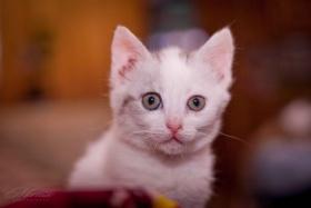 Кстати, вот этого милого котика можно забрать домой, звоните +375 44 753 57 20