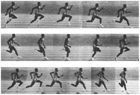 лёгкая атлетика Могилёв Олимпиец