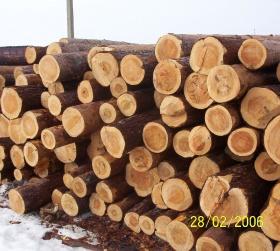 готовый лес