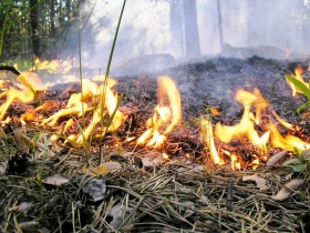 В 2011 году из-за выжигания травы в Могилёвской области сгорело 11 зданий