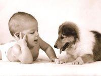 Собака хорошо, но мне бы братика