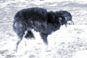 Собачий холод
