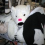Шкура медведя всего за 850т